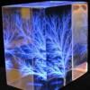 Cómo crear obras de arte a partir de los rayos