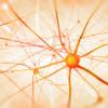 """La consciencia está relacionada con la """"entropía"""", según un grupo de investigadores"""